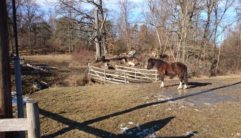 Häst vid Bögs gård, Järvafältet.